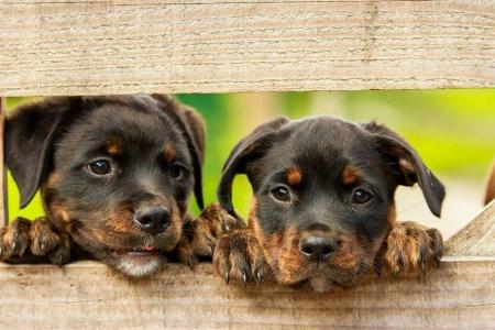 Rok opieki nad zwierzętami bezdomnymi w powiecie dzierżoniowskim -działania C